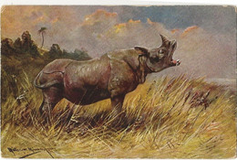 """90 - Rhinocéros """"illustrateur Müller Jun"""" - Rhinoceros"""