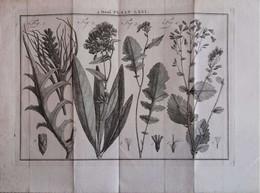 Gravure En Eau Forte XVIIIème Siècle - PLAAT LXVI - Jan Caspar PHILIPS - Incisioni