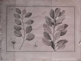 Gravure En Eau Forte XVIIIème Siècle - PLAAT XXXVI - Jan Caspar PHILIPS - Incisioni