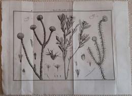 Gravure En Eau Forte XVIIIème Siècle - PLAAT XXXIV - Jan Caspar PHILIPS - Incisioni