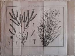 Gravure En Eau Forte XVIIIème Siècle - PLAAT XXXIII - Jan Caspar PHILIPS - Incisioni