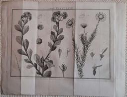 Gravure En Eau Forte XVIIIème Siècle - PLAAT XXXII - Jan Caspar PHILIPS - Incisioni