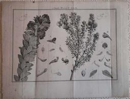 Gravure En Eau Forte XVIIIème Siècle - PLAAT XXIX - Jan Caspar PHILIPS - Incisioni