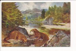 Carte Illustrateur RAPHAEL TUCK & SONS Oilette  N° 3211 ( The Otter ) ( Loutre  ) - Tuck, Raphael