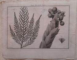 Gravure En Eau Forte XVIIIème Siècle - PLAAT XXX - Caspar Jacobsz PHILIPS - Signature Dans La Planche - Incisioni
