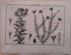 Gravure En Eau Forte XVIIIème Siècle - PLAAT LXX - Caspar Jacobsz PHILIPS - Signature Dans La Planche - Incisioni
