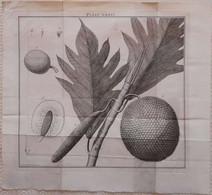 Gravure En Eau Forte XVIIIème Siècle - PLAAT LXXVI - Caspar Jacobsz PHILIPS - Signature Dans La Planche - Incisioni