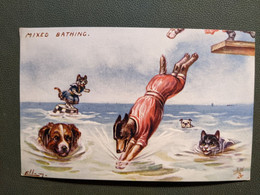 Llustration ELLEN CHATS HUMANISES HABILLES Chat Chien  MIXED BATHING Bain Baigneur Mer N°9636 Raphael Tuck OILETTE - Dressed Animals
