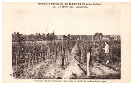 70 Nouvelle Pépinière De MARNAY - Vue D'une De Nos Pépinières Et Son Allée - Sonstige Gemeinden