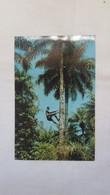 VINTAGE POSTCARD GUINEA - BISSAU HOMEM QUE EXTRAI O CHABEU CIRCULATED 1974 - Guinea-Bissau