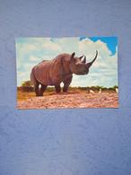 Animali-rinoceronte-fg- - Rhinoceros