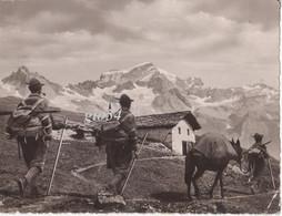 Alpini In Marcia Ollomont Sfondo Grand Combin (10,5x14) Indirizzata Campeggio G.i.l. Veran Cormaiore - Regiments
