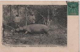 Carte Postale Ancienne/ Guinée Portugaise / Hippopotame  Sur Les Bords Du Rio-Grande/ 1906      CPDIV333 - Guinea-Bissau