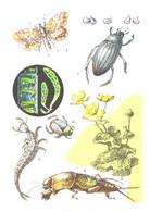 Z.Vorontsova:Grasshopper, Bug, Beetle, Butterfly, 1977 - Insects