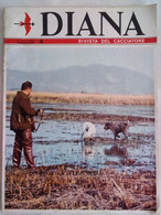 Diana 6 1969 Gattona Arciere Maremmano Stambecco Allevamento Canino Cinghiali Vinkovci Fagiano Upupa Venatoria Cinologia - Sport