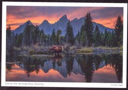AK 001952 USA - Wyoming - Elch Am Ufer Des Snake River - Other