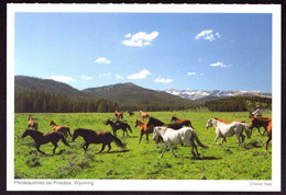 AK 001955 USA - Wyoming - Pferdeaustrieb Bei Pinedale - Other