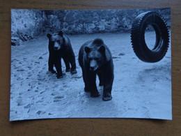 Zoo, Dierenpark, Tierpark / Burg Schonfels, Baren -> Unwritten - Bears