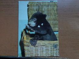 Zoo, Dierenpark, Tierpark / Tierpark Berlin, Junger Malaienbar -> Unwritten - Bears