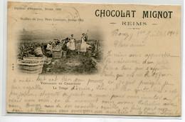 51 VENDANGES En Champagne Le Triage Vendangeurs Vigne  écrite En 1904 Depuis Bouzy     / D19 2021 - Unclassified