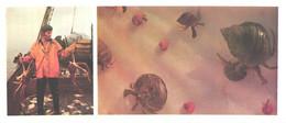 Russia:Crab Fisherman, Ship, Shells, Paralithodes Camtschatica, Pagurus Sp., 1977 - Fish & Shellfish