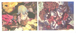 Russia:Seastars, Patira Pectinifera, Shells, Crenomytilus Grayanus, 1977 - Fish & Shellfish