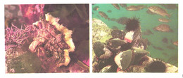 Russia:Shells, Fishes, Crassostera Gigas, Crenomytilus Grayanus, 1977 - Fish & Shellfish