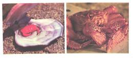 Russia:Shells, Crab, Cancer Amphiooetus, Erimacrus Isenbeckii, 1977 - Fish & Shellfish