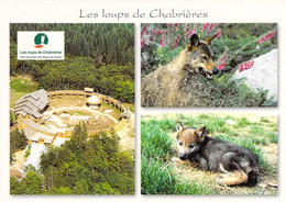 23 - Sainte Feyre - Parc Animalier Des Monts De Guéret - Les Loups De Chabrières - Multivues - Autres Communes