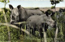 FAUNE AFRICAINE  Rhinoceros Blanc RV - Rhinoceros