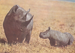 Mozambic - Postcard  Used 1980   -  African Fauna - Black  Rhinoceros And Calf - 2/scans - Rhinoceros