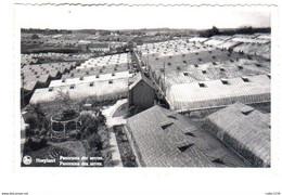 HOEILAART  HOEYLAERT Panorama Des Serres Panorama Der Serren - Hoeilaart