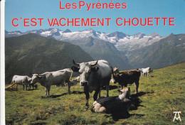 """Vaches """"  Les Pyrénées C'est Vachement Chouette """" - Cows"""
