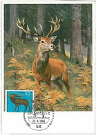 32188 - GERMANY - POSTAL HISTORY -- MAXIMUM CARD Deer HUNTING Animals, 1966 - Maximumkarten (MC)