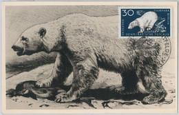 52552 - GERMANY DDR - POSTAL HISTORY -MAXIMUM CARD - 1959  ANIMALS:  POLAR BEAR - Maximumkarten (MC)