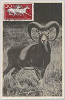 52556  - GERMANY DDR - POSTAL HISTORY - MAXIMUM CARD - 1957  ANIMALS:  Ram - Maximumkarten (MC)