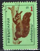 BULGARIA - 1963 - SCOIATTOLO ROSSO - USATO - Gebraucht