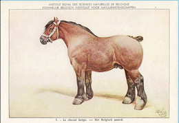 KBIN / IRSNB -  Huiszoogdieren - 1960 - 1 - (as New) Le Cheval Belge, Het Belgisch Paard - Cows