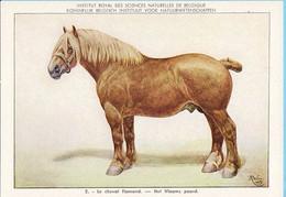 KBIN / IRSNB -  Huiszoogdieren - 1960 - 2 - (as New) Le Cheval Flamand, Het Vlaams Paard - Cows