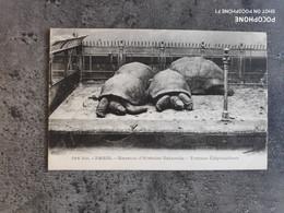 CARTE POSTALE CP VINTAGE PARIS MUSEUM HISTOIRE NATURELLE TORTUES ÉLÉPHANTINES TBE - Turtles