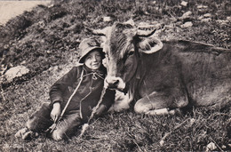 LOVELY IMAGE OF YOUTH WITH COW - Cows
