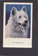 Dog Card  -  The Aristocrat.   RPPC.   (048). - Perros