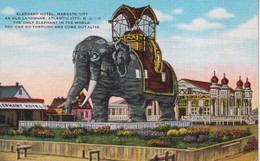 ETATS UNIS(ATLANTIC CITY) ELEPHANT - Atlantic City
