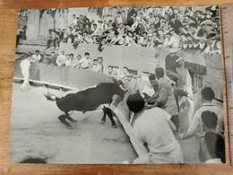 Arenes D'arles Taureau Camargue Moulinois,photo Semonnay Beaucaire, Course Cocarde,manade à Déterminer, 30x40cm - Autres