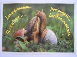 Cpm Couple D'escargots Koppel Huisjeslakken Edit U.P.C. Slovenija - Andere