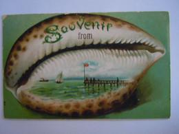 Cpa Souvenir From .. Shell Coquille Coquillage Zee La Mer Carte Gaufrée - Vissen & Schaaldieren