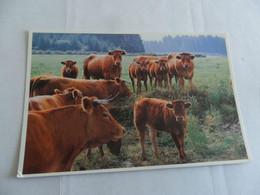 Image De Nos Campagnes - Cows