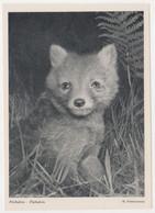 FUCHSLEIN,H.SCHUNEMANN,,POSTCARD - Bears