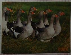 Petit Calendrier De Poche 2008 Oiseau Oie éditions Lavigne - Formato Piccolo : 2001-...