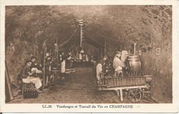 Vendanges Et Travail Du Vin En CHAMPAGNE.  (scan Verso) - Champagne-Ardenne